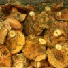Esclata-sangs: Hunting for Wild Mushrooms