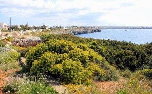 Menorca Open for Work & Play