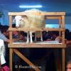 Vetla des Be – Vigil of the Lamb