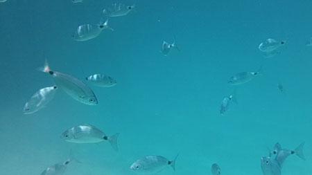 Snorkelling Sa Mirador, Menorca