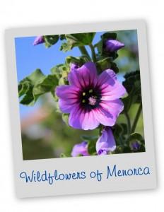 Wildflowers Menorca Blue