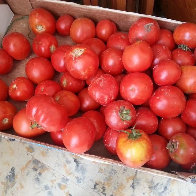 Tiempo de sofrito casero Time to make some homemade sofrito @menorca @menorcablue @tomates @tomatoes