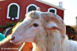Lamb of Sant Joan
