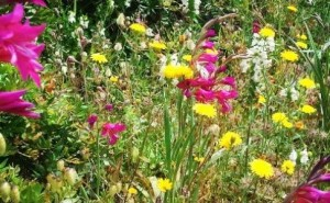 Hunt for Menorca's Wild Orchids